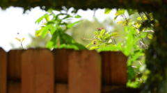 Focus on green vegetation outside of the wooden bench - stock footage