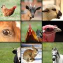 Stock Photo of collection of images with animals