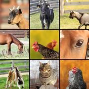 Kollaasi tehty otettuja kuvia maatilalla Kuvituskuvat