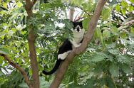 Stock Photo of black cat on the tree in garden.