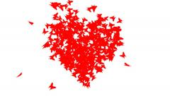 Butterfly Heart. - stock footage