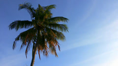 Palm tree and blue sky - stock footage