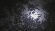 Stock Video Footage of view of moon behind the tree
