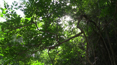 Move through the tropic forest. Slider. Thailand. Stock Footage
