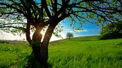 Summer landscape. 4K. FULL HD, 4096x2304. Stock Footage