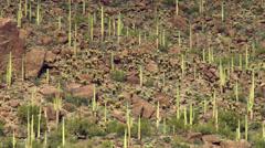 4K Desert Landscape Stock Footage