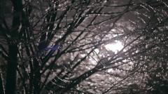 Tree full of sleet in Slovenia - stock footage