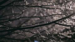 Sleet on Tree At Night - stock footage