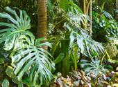 Stock Photo of subtropical plants in summer city park grove