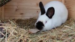 Rabbit eating food Stock Footage