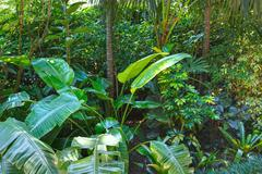 subtropical plants in summer city park grove - stock photo