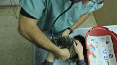 Animal hospital Veterinarian checking up on a cat Stock Footage