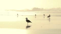 Shining Seashore Gulls Stock Footage