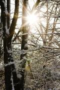 Sunburst Through Snow - stock photo