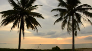 Stock Video Footage of Coconut trees on the beach and sunsets