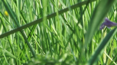 Green gras. Camera movement. Stock Footage