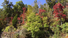 Natchez Trace Parkway colorful trees great nature Stock Footage