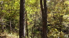 Forest trees on a sunny day Stock Footage