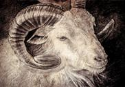 Stock Illustration of sketch made with digital tablet of goat head with big horns