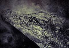 Illustration made with digital tablet, crocodile Stock Illustration