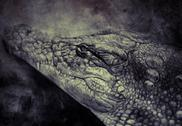 Stock Illustration of illustration made with digital tablet, crocodile