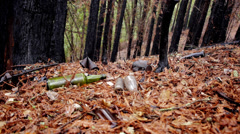 Garbage, polluting nature, in fire damaged forest. Stock Footage