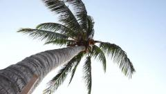 Palm Tree Perspective Stock Footage