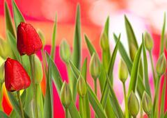 tulips - stock illustration