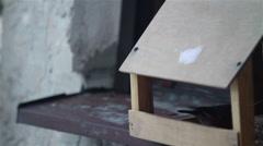 Bullfinch bird at bird house - stock footage