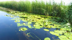 A water channel full with water lilies in the Danube Delta Biosphere Reserve Stock Footage