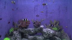 clownfish - stock footage