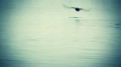 Sea bird dolphin pod vingette Stock Footage