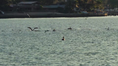 Different breeds of birds fly together over water Stock Footage