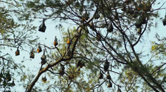 Flying fox 2 Stock Footage