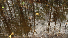 Reflection of trees in puddle Stock Footage