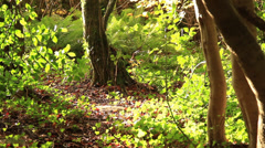 Green bushes in forest Stock Footage