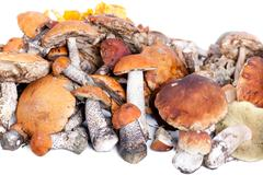 Stock Photo of collection of delicious edible mushrooms