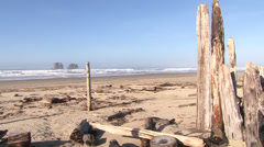 Driftwood Filled Beach Stock Footage
