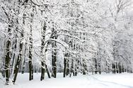 Stock Photo of beautiful russian winter