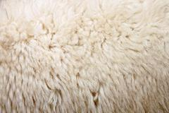 Zoom wool of sheep. Stock Photos