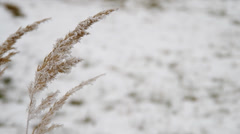 Frozen grass in early winter Stock Footage