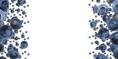 Blueberry frame (on white) Stock Illustration