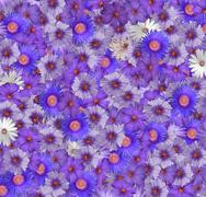 Stock Photo of flower background