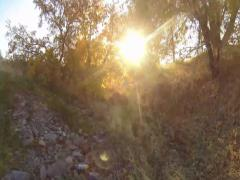 Golden Sun Shining Through Fall Leaves Stock Footage