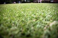 Stock Photo of green grass in the garden.