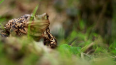 Frog in the grass - stock footage