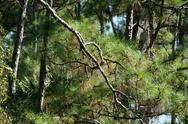 Stock Photo of close up of pine forest