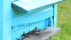 Honey bees before the hive entrance Stock Footage