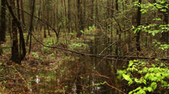 Wild forest - stock footage