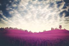 surreal dramatic landscape, ultraviolet foliage - stock photo